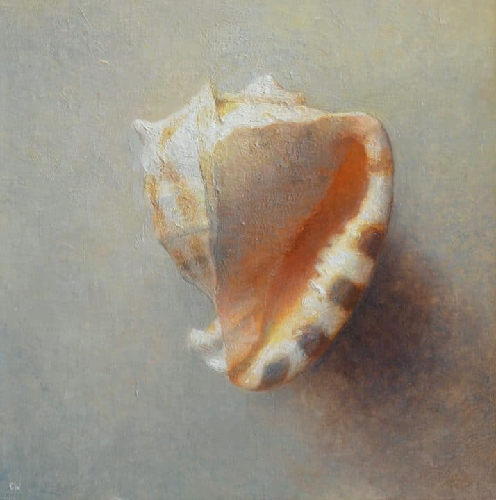 Shell on Grey Green