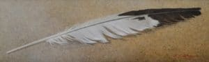 Gull Feather