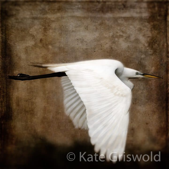 Great Egret C-I