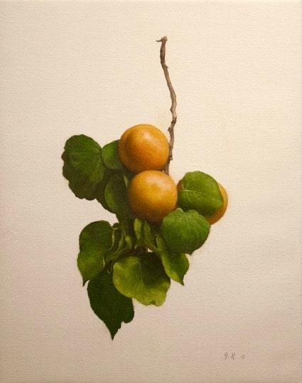 Apricot Study