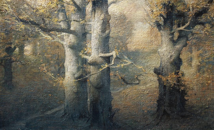 Beeches, Evening