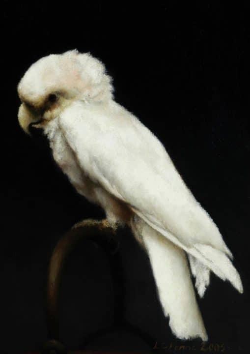 Portrait of a Cockatoo