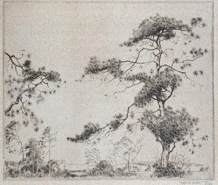 Pines (California Pines)