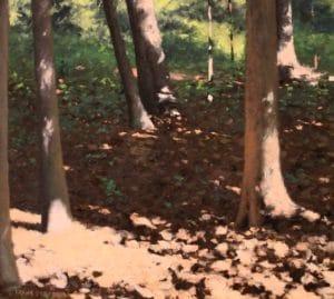 Sun Sparkled Forest