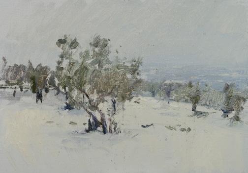 Winter Olives, Tuscany
