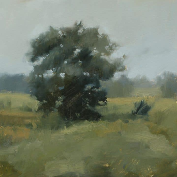Shady Tree Study