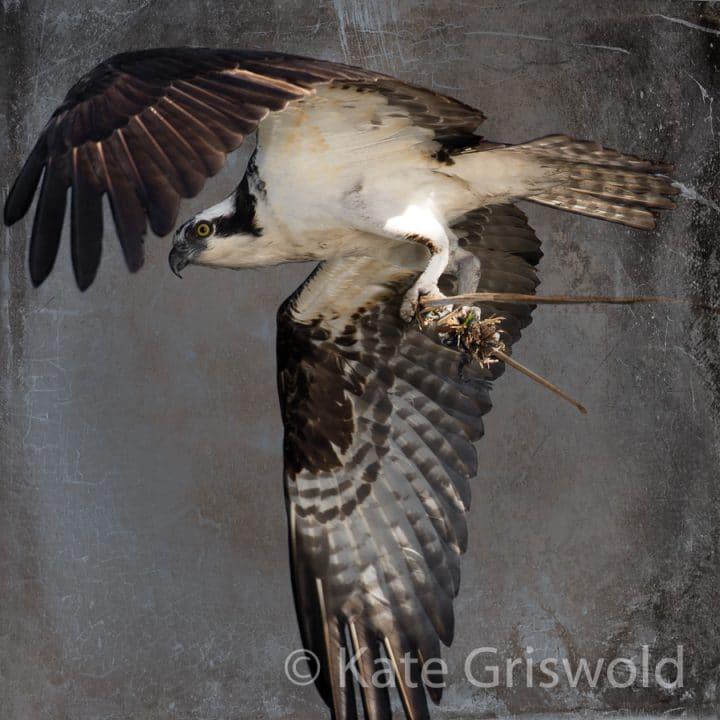 Osprey C-VIII