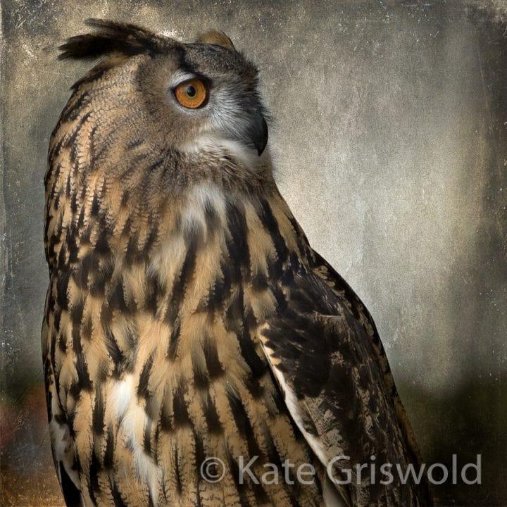 Eurasian Eagle Owl C-I