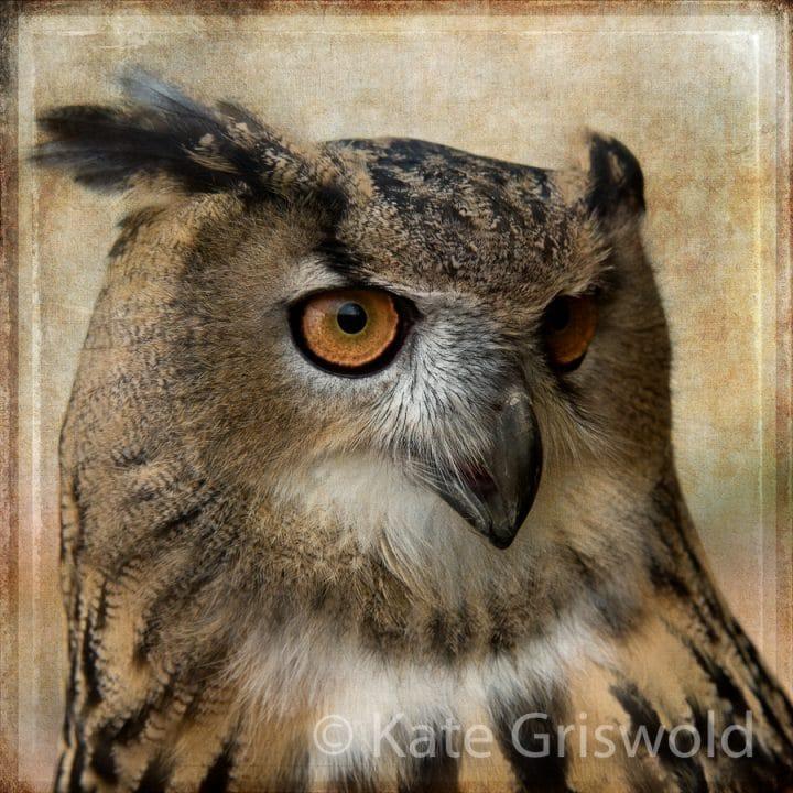 Eurasian Eagle Owl C-II