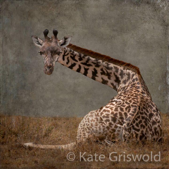 Giraffe C-IV