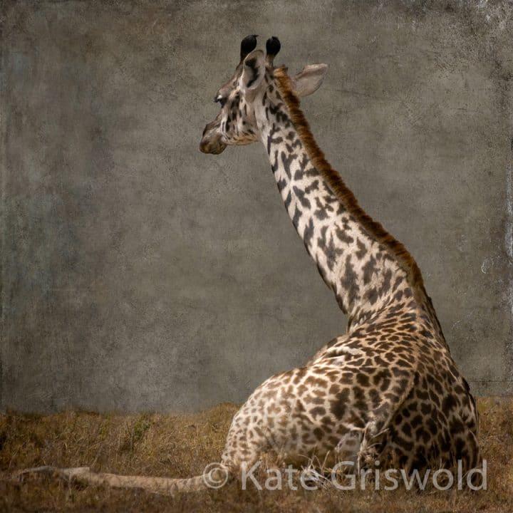 Giraffe C-III