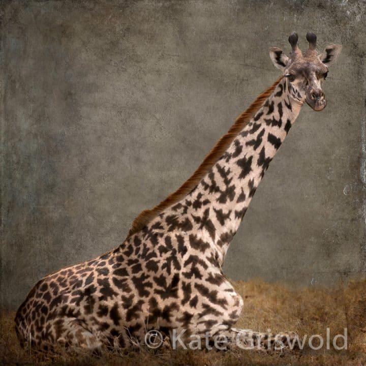 Giraffe C-II