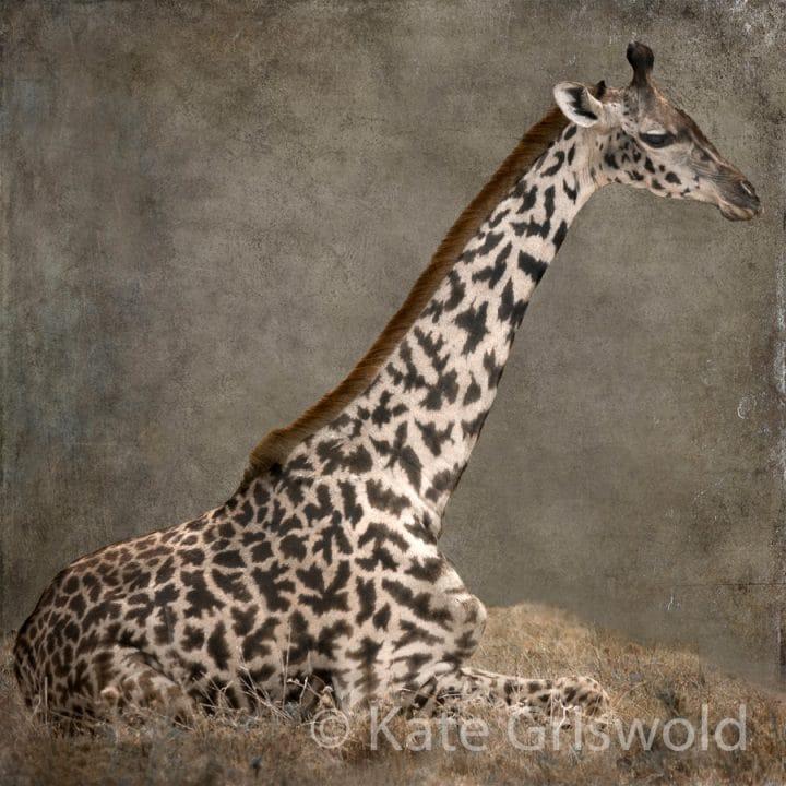 Giraffe C-I