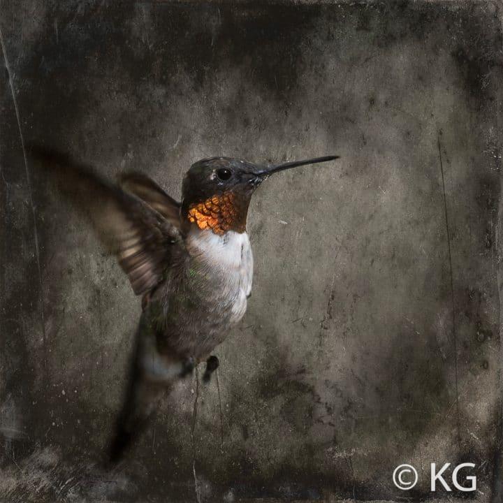 Hummingbird C-IV