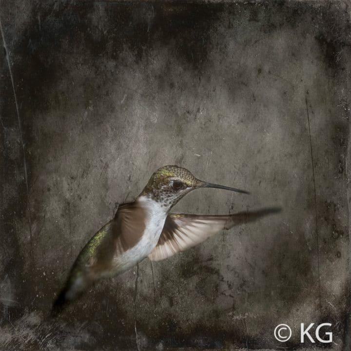 Hummingbird C-VI