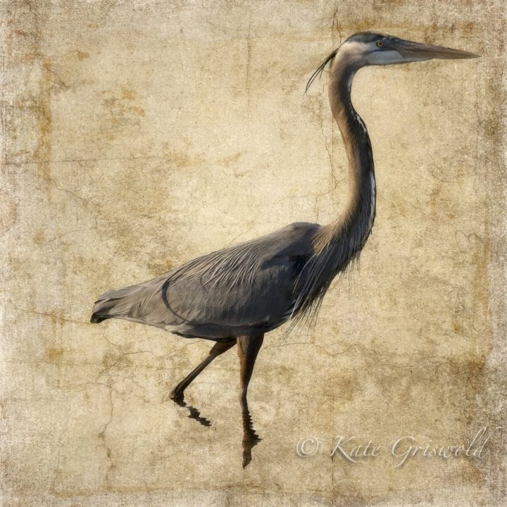 Great Blue Heron on Gold