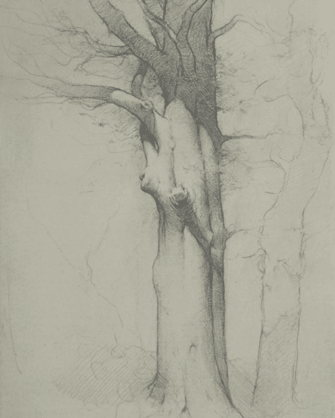 Beech Tree, Spring