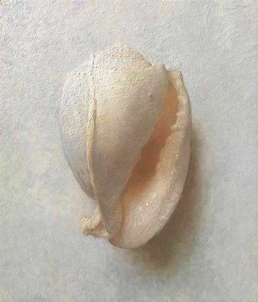 Large Shell