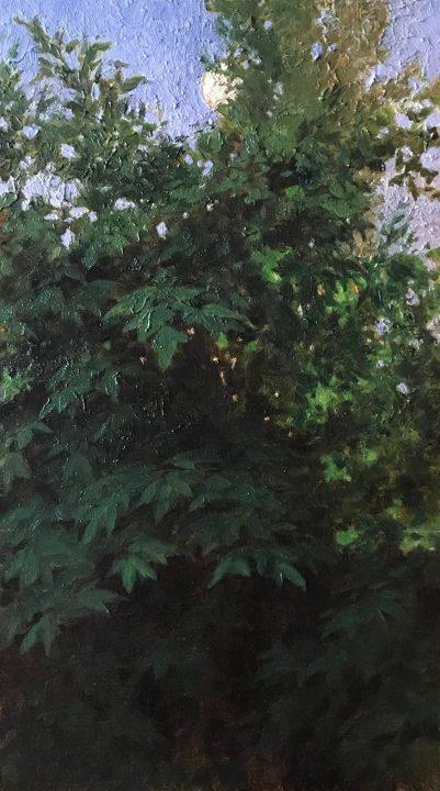 Sambuca Trees at Twilight