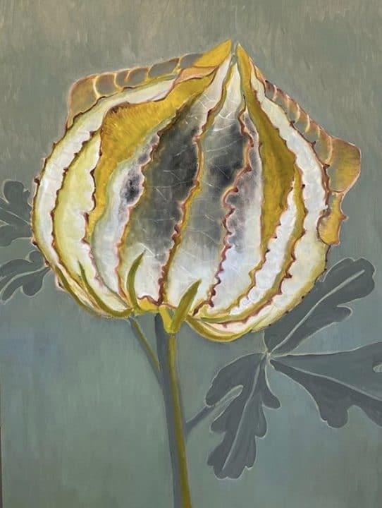 Hibiscus Trionum Pod
