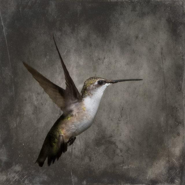 Hummingbird C-II