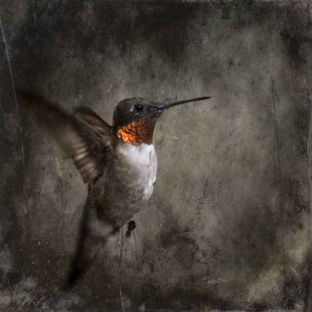 Hummingbird C-I