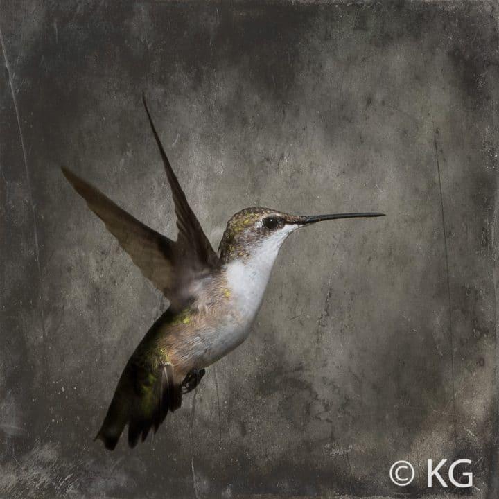 Hummingbird C-III